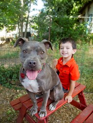 BSL, BDL, pit bulls, pit bull terriers, Best Friends Animal Society, Breed Specific Legislation, pubic safety, dog bites