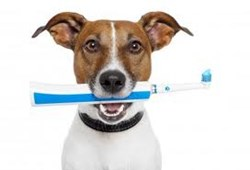 Parkway Pet Clinic offers affordable Dog and Cat Dentals