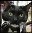 Pita Cat