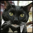 Pita Cat and the MustLoveCats.net Family Introduces Their New Online...