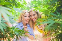 Photographed in the Medicinal Marijuana Gardens of Tikun Olam in Israel, this dynamic duo travels the world to bring the best of cannabis culture to the United States.