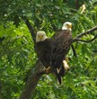 Grant County's extensive trails give hikers a glimpse at rare wildlife, such as these two bald eagles.