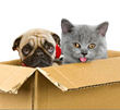 Los Angeles Movers Offer Tips for Relocating With Pets