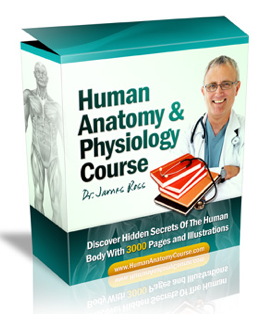 Anatomy course home sexual study