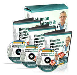 Human Anatomy and Physiology Study Course