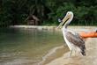 GoPro Pelican