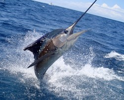 Costa Rica Sport Fishing Vacations at Crocodile Bay Resor