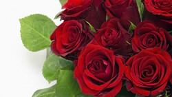 <long stem red roses>