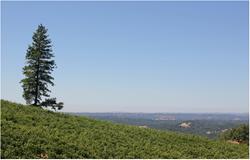 Eldorado Wines, Placerville CA