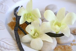 Vanilla Promotes Mental Clarity & Pleasure