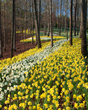 Gibbs Gardens more than 50 acres of daffodils is the largest display of daffodils in the nation.