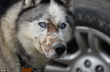 Animal Support Calls for Passage of Logan's Law by Michigan...