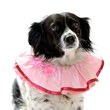Pink satin formal Rrruffler on spaniel