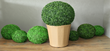 Geranium Street Floral Has Received Another Large Shipment of Artificial Boxwood Balls