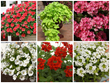 Suntory Flowers Showcases Top Performing Plants at the 2014...