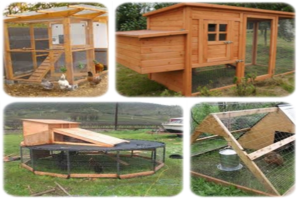 Building A Chicken Coop Review Reveals How To Build A Chicken Coop ...