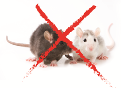 Regulations Impact Rodenticide Sales, sees Kline