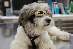 Vancouver veterinary clinic offers alternative pet health care