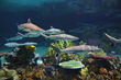 National Aquarium's Blacktip Reef Thrives in Its First Six Months