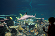 National Aquarium's Blacktip Reef
