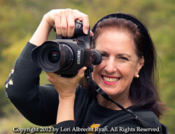 "Sally Wiener Grotta, master photographer and author of the critically acclaimed novel ""Jo Joe"""