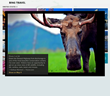 Trover created the widgets by employing best practices learned while creating custom programs for Bing Travel apps for Windows and Windows Phone.