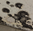 Chicago College Faces Mold Problem, My Cleaning Products Asserts Two...