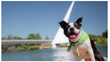 Follow Stella, an adorable Boston Terrier, on a dogs-eye-view of her ultimate weekend road trip through the Mt. Shasta region of California.