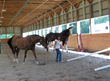 The Horse Institute Announces Crowdfunding to Raise $5,000 for...