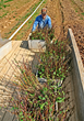 West Virginia Division of Forestry Extends Deadline to Order Seedlings