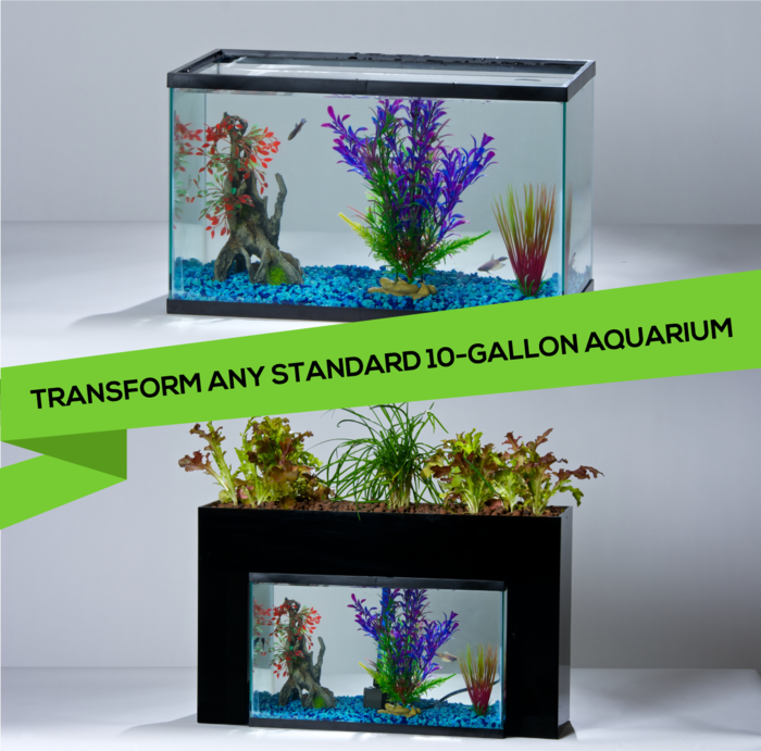 Countertop Aquaponics System : ... Announces the Release of an Aquaponic System for Home Aquariums