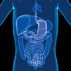 Health Benefits of Probiotics