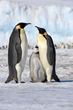 Adventure Life Announces Exclusive Rates on Antarctica Cruise
