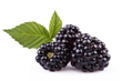 """Benefits Of Blackberries,"" a New Report On Vkool.Com, Reveals Useful..."