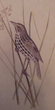 C J Maynard 1881 Black and White Shore Finch: Rush Plant (Dusky Seaside Sparrow). Heade  must have realized that encroachment on the beautiful bird's habitat would one day cause the bird's demise.