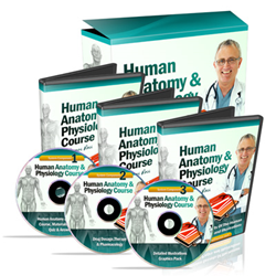 human anatomy and physiology course review