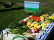 organic gardening, organic, California, Silicon Valley, San Jose, the South Bay Area, gardening, vegetable garden service