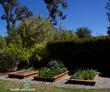 Organic Gardening, organic, California, organic food, vegetable garden service, gardening