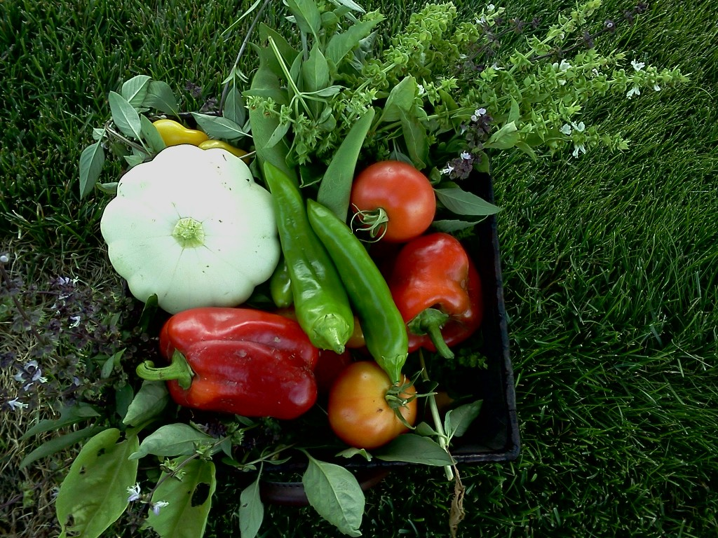 Home produce garden - Startorganic Recognizes That The Look And Feel Of A Residential Vegetable Garden Is Important And They Strive To Create And Install Functional And Visually