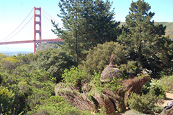 View of the Golden Gate Bridge
