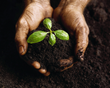 Healthy Soil from Waste