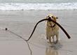 dog-friendly dogtrekker
