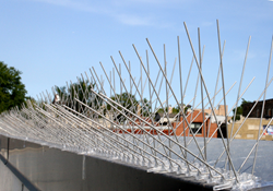 stainless steel spikes, bird spikes, pigeon spikes, seagull spikes, ledge spikes, building spikes
