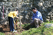 Gary Norman helps with Arbor Day tree planting in CT