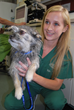 Board Certified Veterinary Dermatologists Debunk the Myths About Pet...