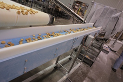 Cookies being conveyed on a DynaClean conveyor from Dynamic Conveyor
