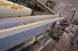 Gourmet Cheese Straw Manufacturer Wins a Conveyor System