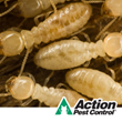 Evansville Pest Control Company Prepares For Termite Awareness Week