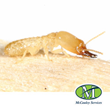 Arkansas Pest Control Company Prepares For Termite Awareness Week