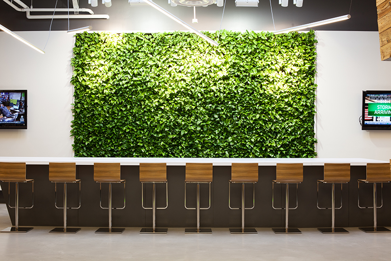Cannondale spruces up new connecticut office with gsky Green walls vertical planting systems